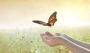 lacher papillon